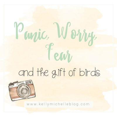 Panic, Worry, Fear and the Gift of Birds