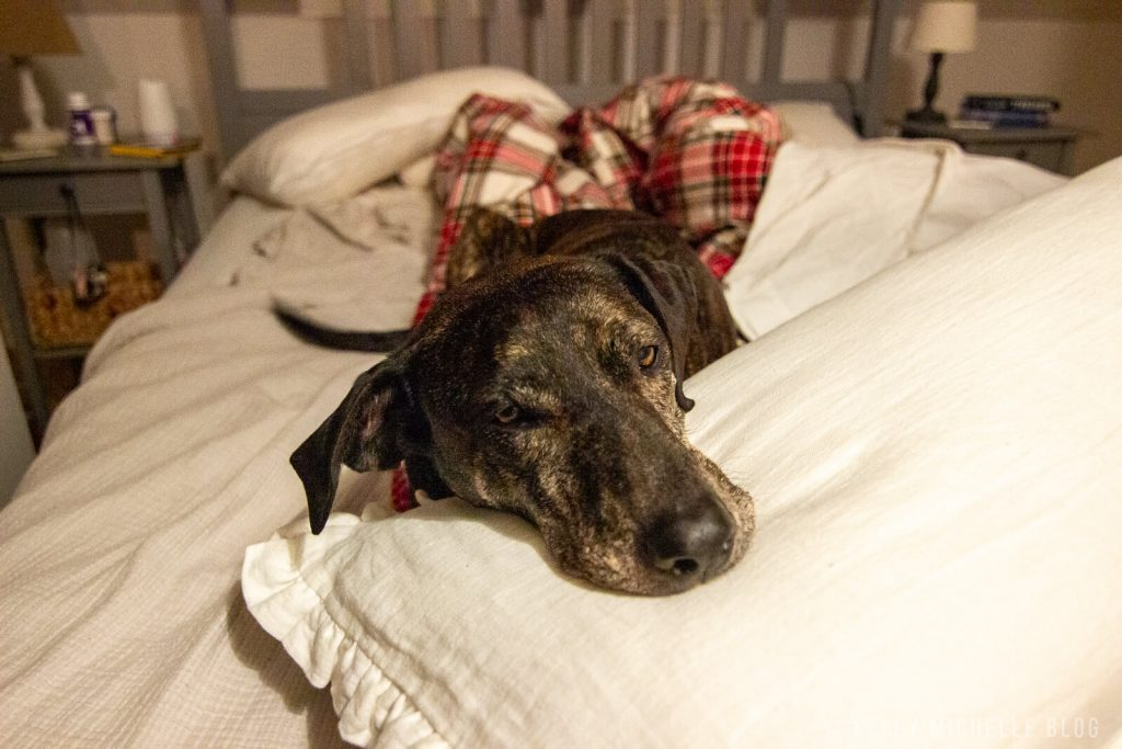 Dog laying on bed with head resting on pillow