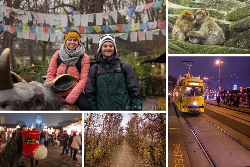 Collage of photos in Vienna. Top left: Man and woman smiling with greenery in background. Top right: Monkey picking another monkey's teeth. Bottom right: Ringstrasse tram. Bottom left: Hand holding boot shaped mug. Bottom middle: Trees with no leaves