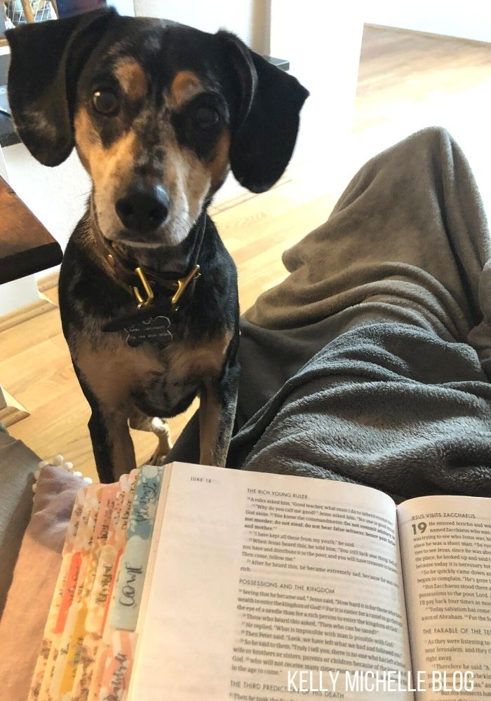 Bible sitting on the lap of a person. A dog standing with two paws on the chair looking at camera.