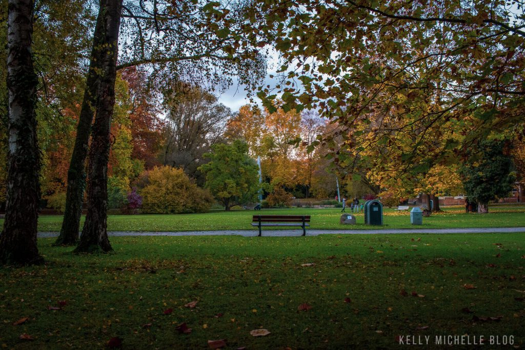 A green space in a park with fall colored trees in the background. A bench is in the middle of the green space.